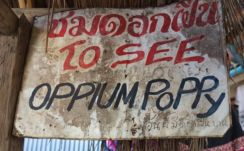 Opium Poppy, Doi Pui, Thailand