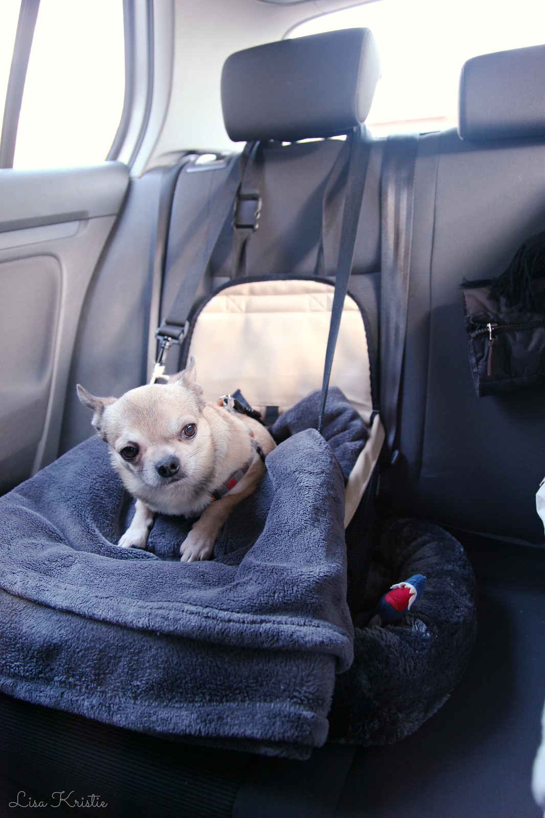chihuahua dog car seat safety belt harness
