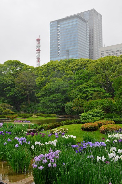 Iris garden at Imperial Palace