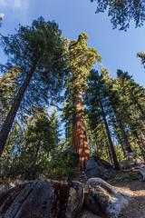 Kings Canyon & Sequoia - 80