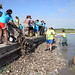 Volunteers work together at a oyster reef restoration site.