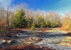 Bartlett Mountain (16)