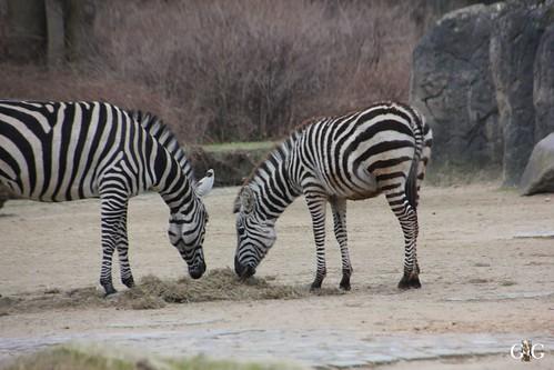 Berliner Zoo 22.02.201520