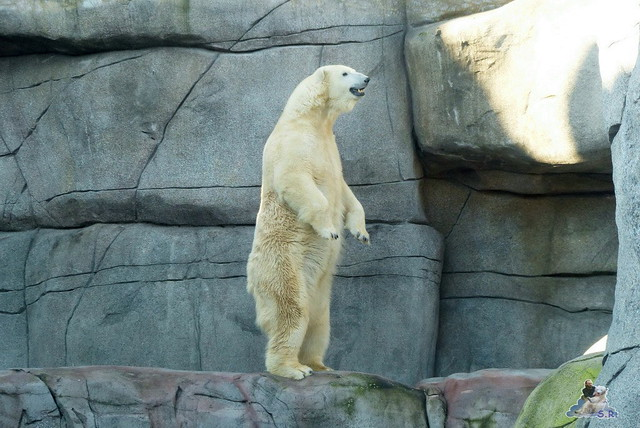 Tierpark Hagenbeck 27.02.2015  55