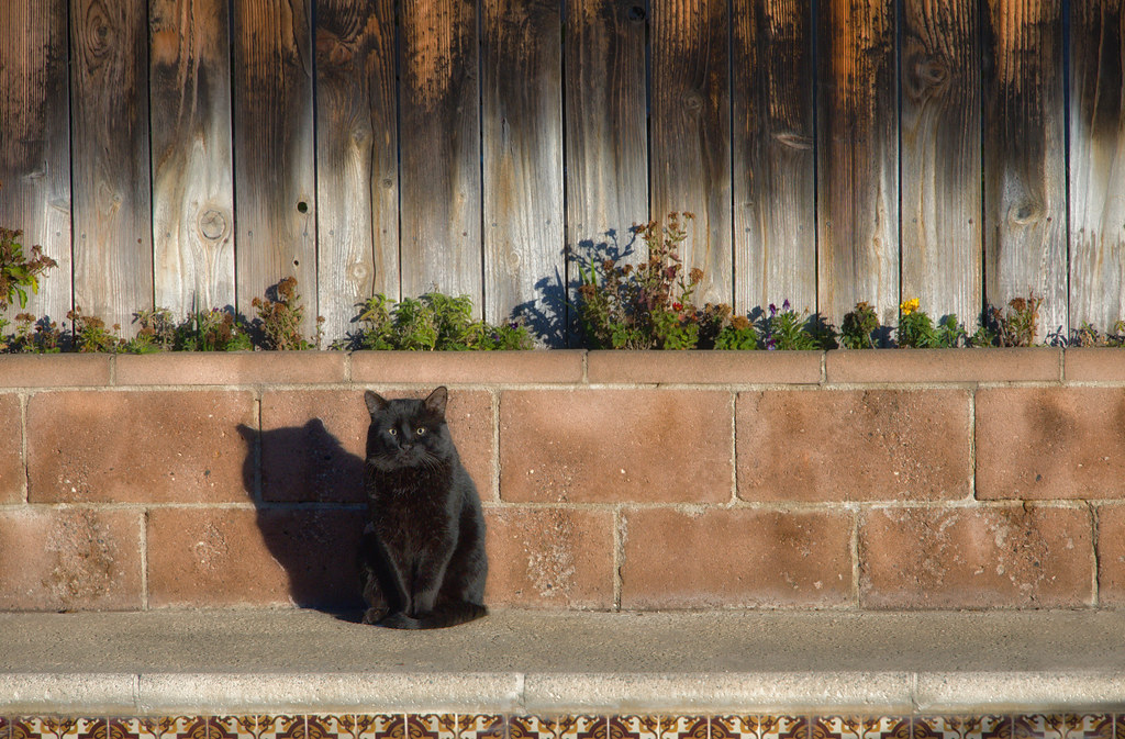 The Most Common Superstitions: Origin and Meanings