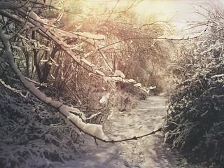 Rocios y nevadas