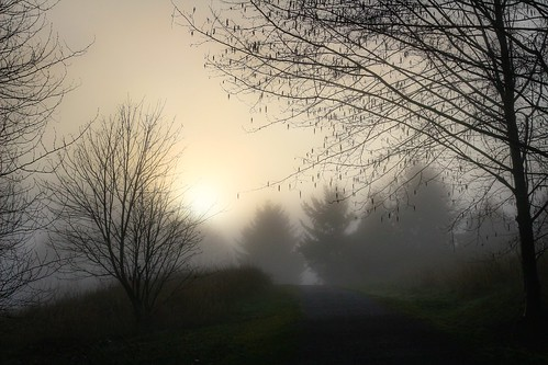 trees mist silhouette fog sunrise bc explore burnaby foggysunrise inexplore 40mmpancake deerlakeparkburnaby canonsl1