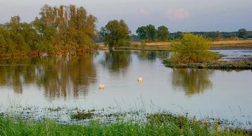 trees sunset grass birds landscape swan bush poland polska backwater trawa ptaki drzewa krajobraz krzew zmierzch łabędź światłocień rozlewisko coloursofwater chairscuro barwywody