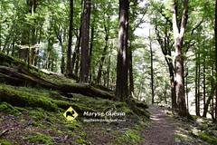 02 Greenstone track Nouvelle-zélande