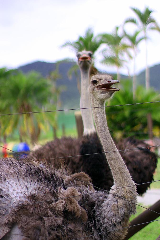 07-look do dia no zoologica santur balneario camboriu