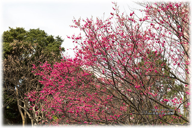 0202陽明山花卉006
