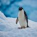 Penguin Shake by Baron Reznik