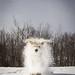 A furry snowball.