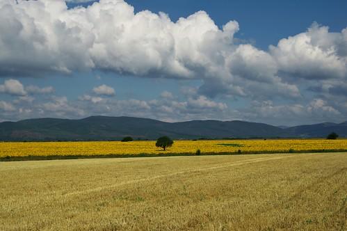 field clouds landscape outdoor bulgaria sunflower