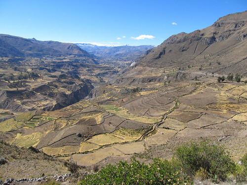 Les terrasses de la vallée de Colca