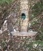 Squirrel in the Bird Feeder 1