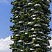 Vertical Forrest by _Hadock_