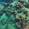 Underwater life of Malaysia's Mabul Island.