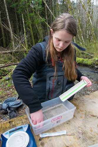 Kelly Petty, a fisheries technician intern with Sitka Conservation Society, learns how to measure fish smolt on Twelvemile Creek on Prince of Wales Island. This internship program exposes local youth to careers in fisheries and land management. (Photo courtesy of Bethany Goodrich).