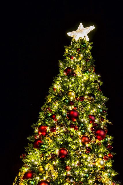 Downey Christmas Tree Lighting 2014