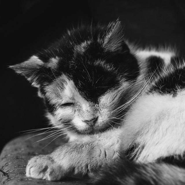 [344] Sleepyhead