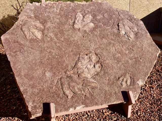 Dilophosaurus Tracks