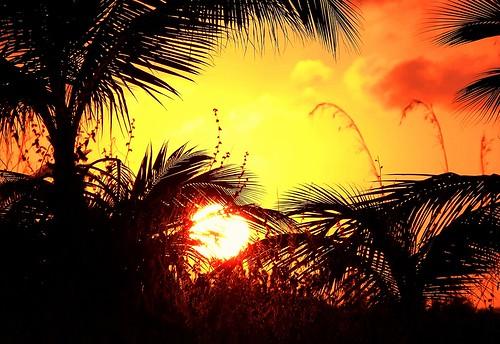 sun sunrise soleil cuba palmiers leverdesoleil