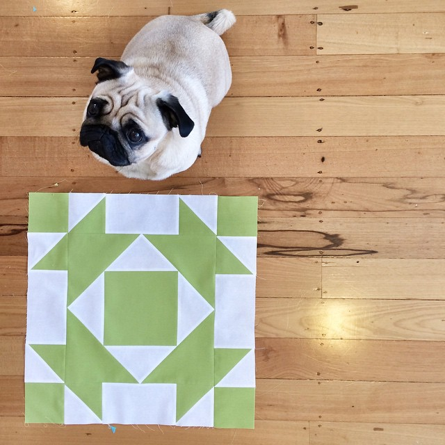 Block 5 and my little helper (who really really wanted his dinner). #modernbuildingblocks #quilt #patchwork #pug #pugsofinstagram #dog