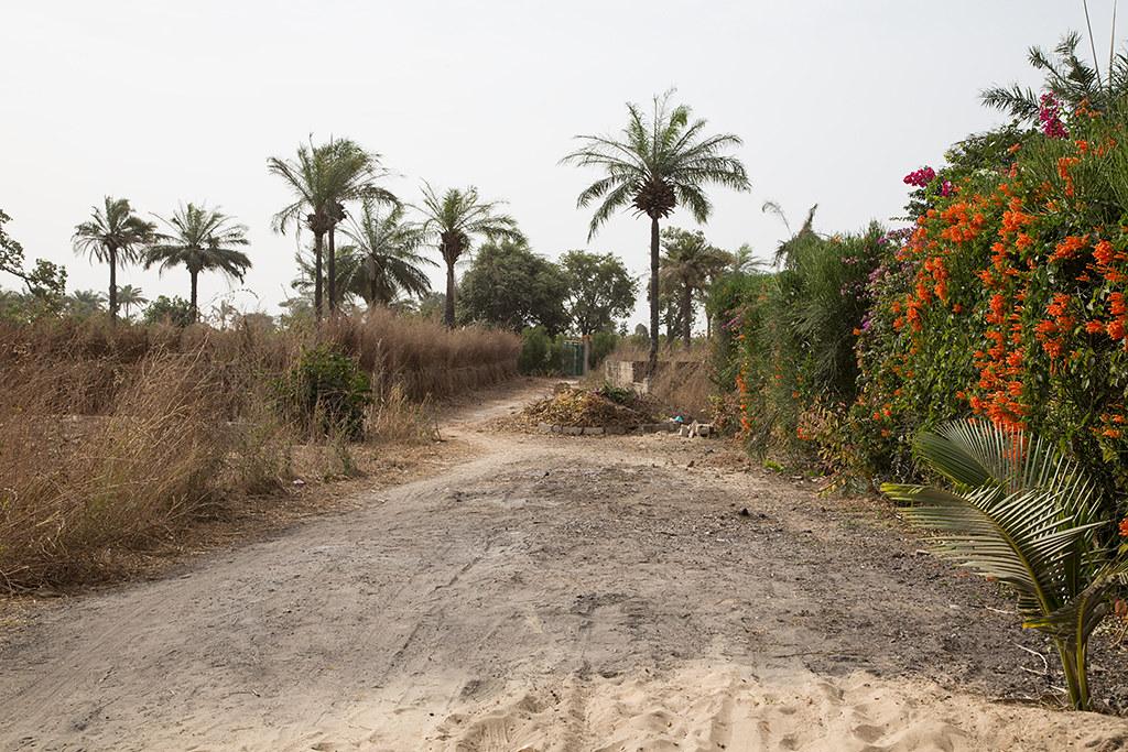 Farakunku surroundsGambia