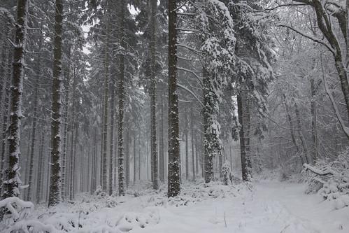 [15P52F6] Winter II