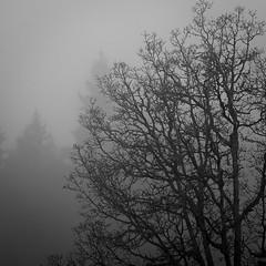 Fog & Mist