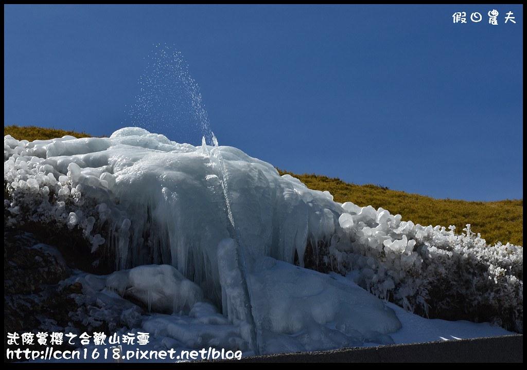 武陵賞櫻之合歡山玩雪DSC_5264