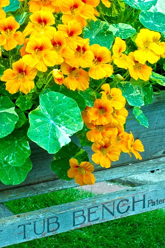 Nasturtiums Tub Bench