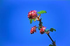 11 Gartenblumen 1987