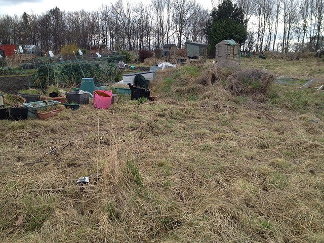 Bushwhacked allotment