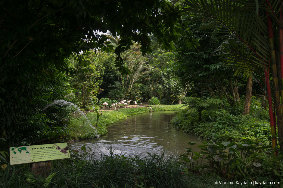 Singapore zoo by Vladimir Kaydalin
