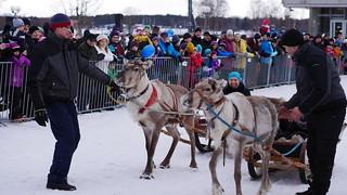 Reindeers & Fun
