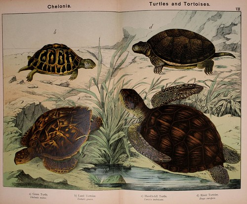 013-Natural history of the animal kingdom for the use of young people..- 1889-William Forsell Kirby