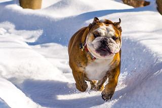 Brembo in the Snow