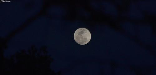 Tan Eterna como Siempre se asoma la Luna Llena Sobre Mexicali 5/03/2015 Foto:El Lemus