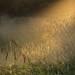 Barcombe Cut at dawn by Peter MacCallum-Stewart
