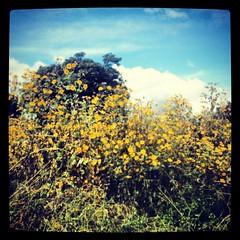 Tomamos el cruce equivocado y nos fuimos a embarrancar... Pero como todo tiene una razón en está vida, terminamos rodeados de un bellísimo jardín silvestre!!! #wildflowers #chimaltenango