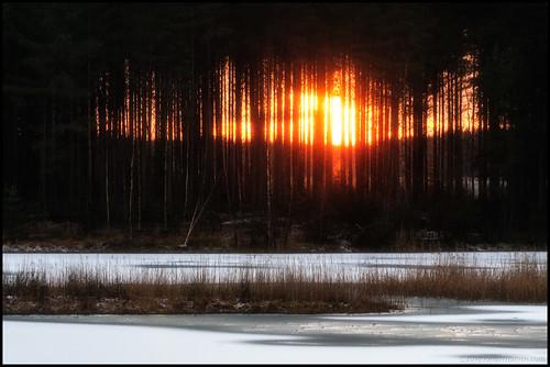 trees sunset sunlight lake snow ice grass forest evening is skog snö träd solnedgång sjö gräs kväll solljus