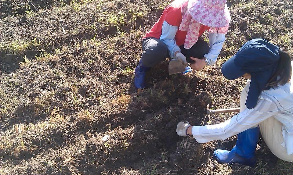 八月志工在學田梯田區播種花生