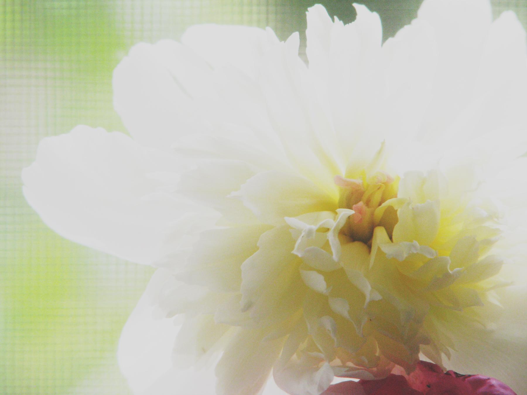 IMG_1732_flower
