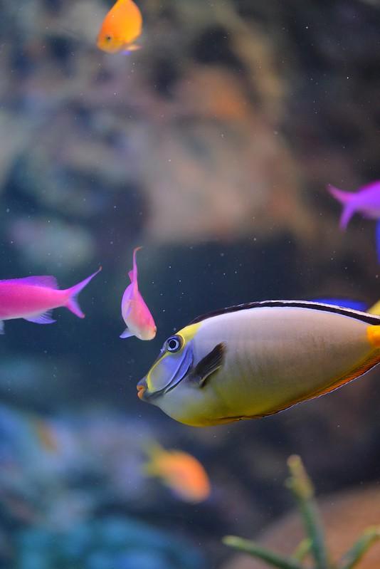 サンシャイン水族館 2015年2月11日