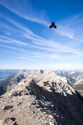 blue sky mountain black birds trekking landscape lumix austria tirol view hill peak panasonic summit innsbruck nordkette karwendel gipfel mountainridge bergdohle bettelwurf naturallightning olympusm918mmf4056 dmcg6 panasonicdmcg6 panasoniclumixdmcg6 lumixdmcg6