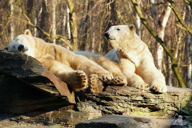 Tierpark Berlin 21.02.2015  026