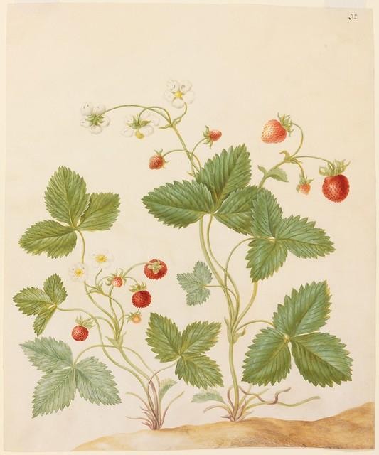 Aerd Bessen (Erdbeeren)
