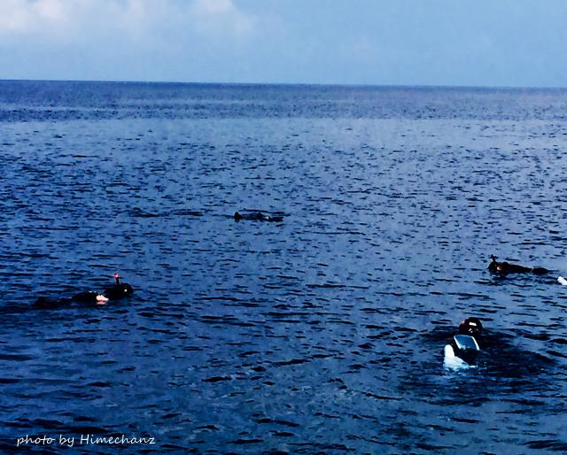 ポイントに着くやいなや、水面にマンタ発見!昨日マスターしたスノーケリングテクニック使って、早速マンタウォッチング♪この後、ヒメチームは水中でダイビング中にも見れましたよ♪